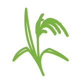 src/main/sourceapp/1/images/rice.png